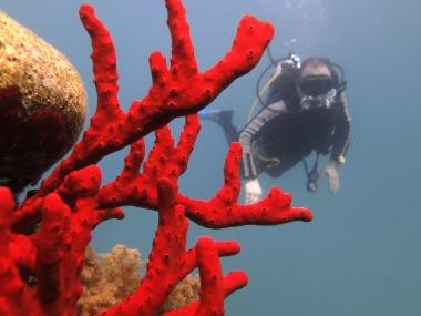 corals!!